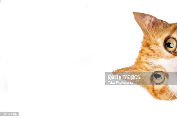 funny cat - funny animals stock pictures, royalty-free photos & images