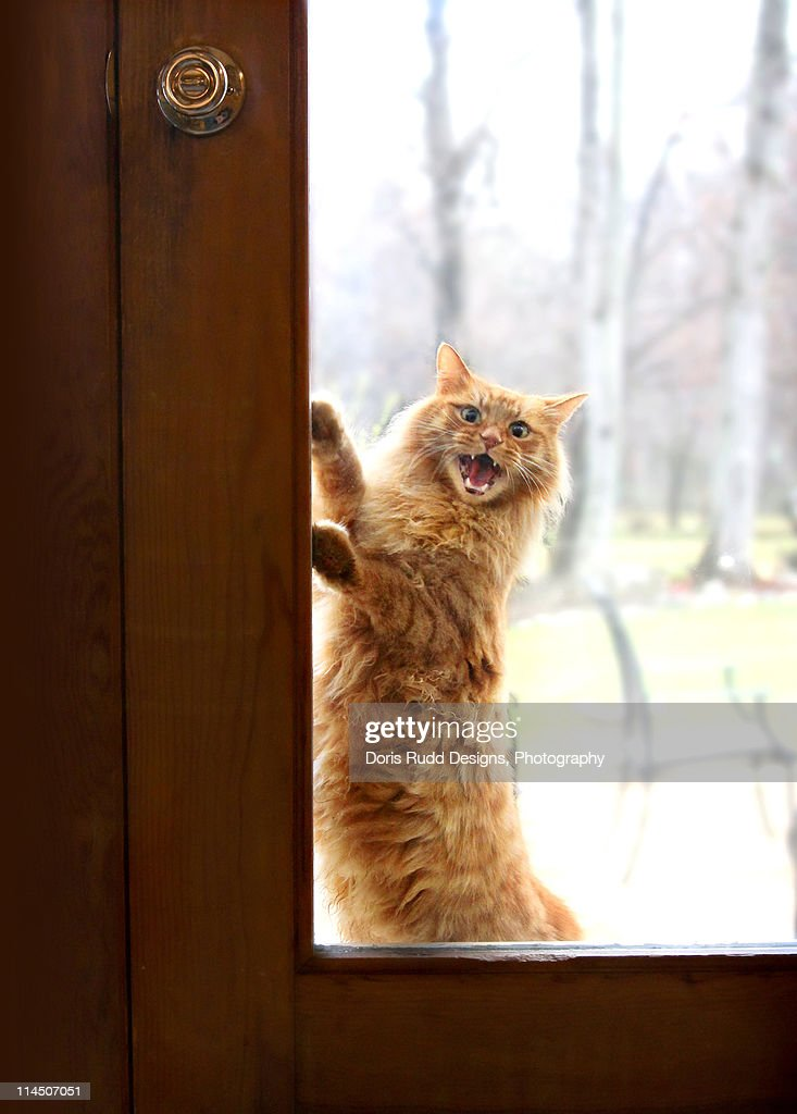 funny-cat-wanting-to-get-inside-house-picture-id114507051 - Show Posts - hubag bohol