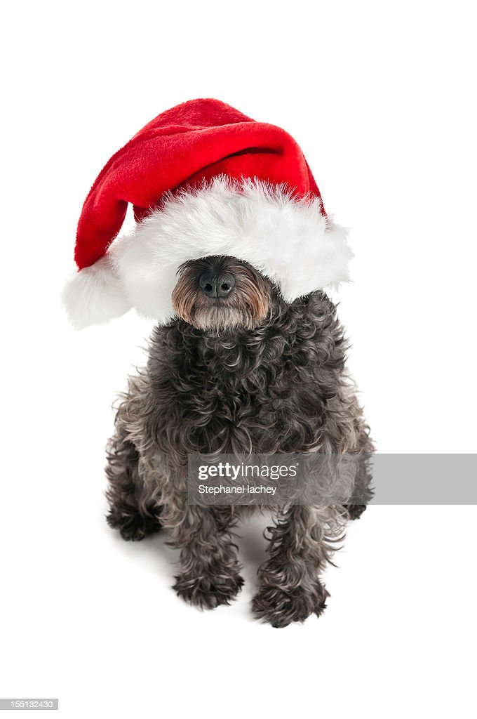 funny christmas dog stock photo