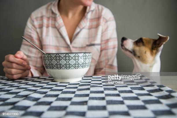 funny cute dog in table during breakfast time. - adults only stock pictures, royalty-free photos & images