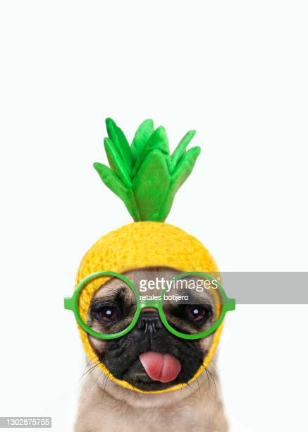 funny dog - hat stock pictures, royalty-free photos & images