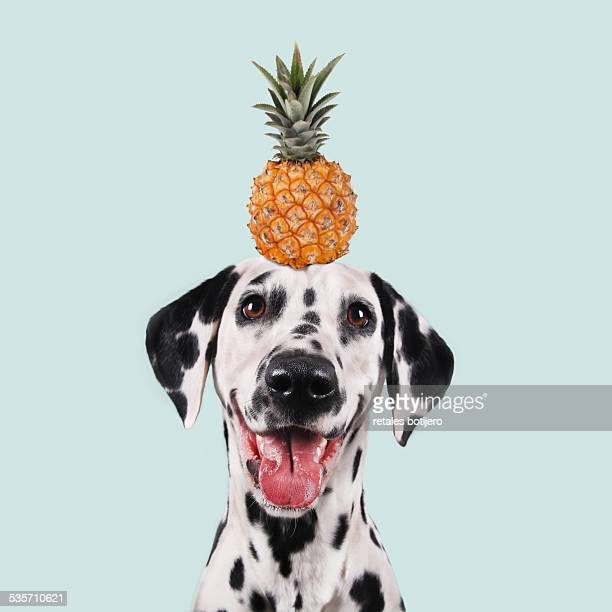 funny dog - animal stock pictures, royalty-free photos & images