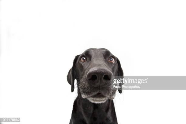 funny dog - neus van een dier stockfoto's en -beelden