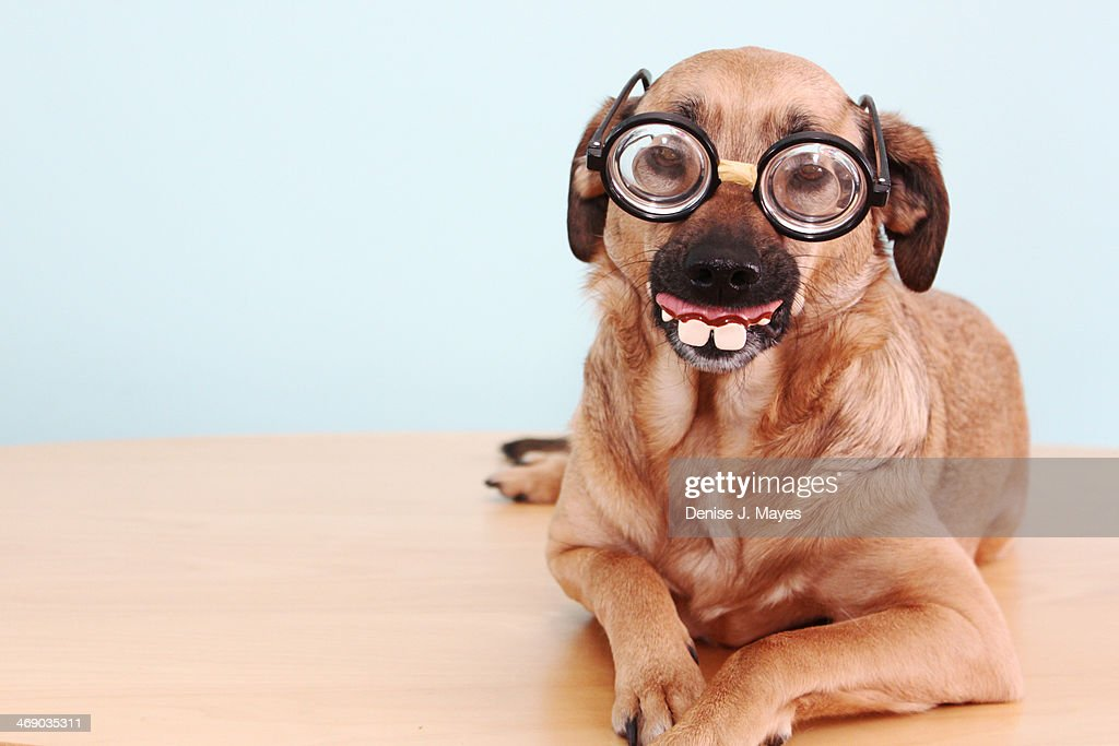 Funny Dog with a disguise : Stock Photo