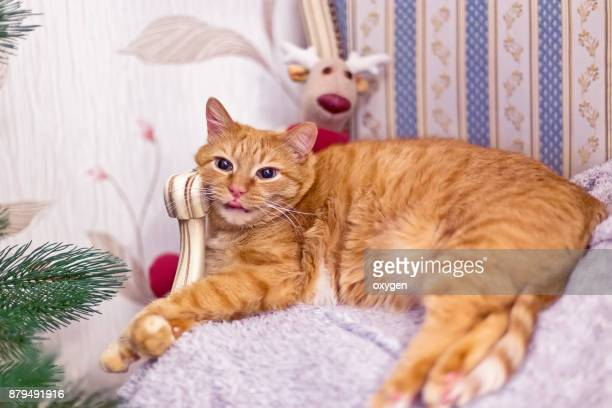 funny ginger cat with tongue - male stripper stock pictures, royalty-free photos & images