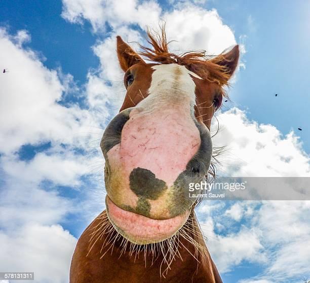 a funny horse - laurent sauvel photos et images de collection