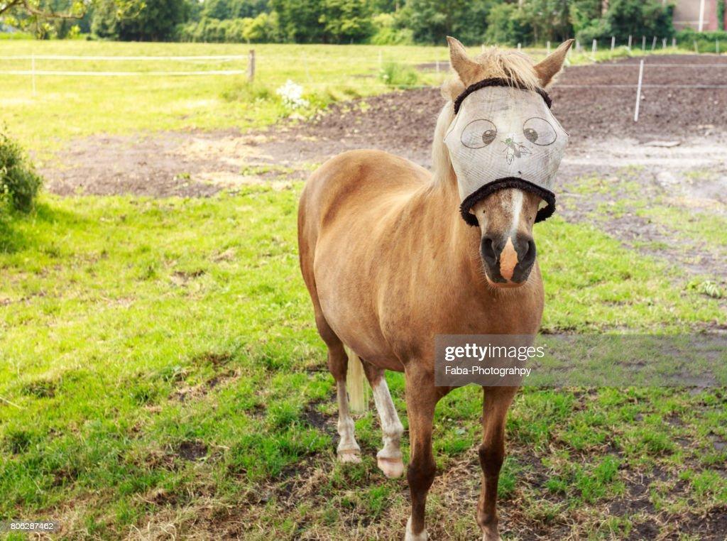 Funny Horse : Stock Photo