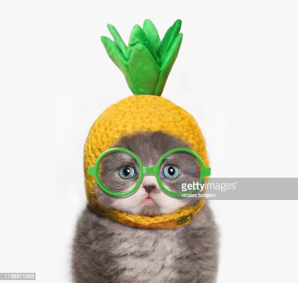 funny kitten - yellow hat stock pictures, royalty-free photos & images