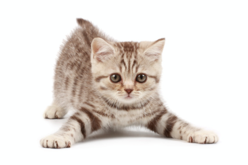 Funny kitten 91626487