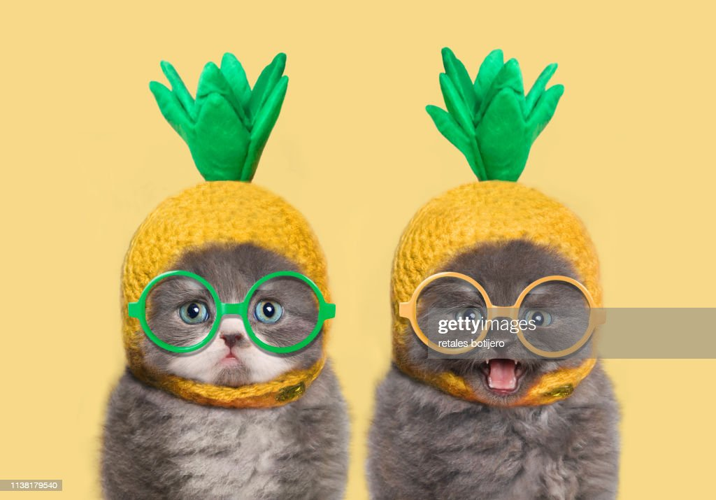 Funny kittens : Stock Photo