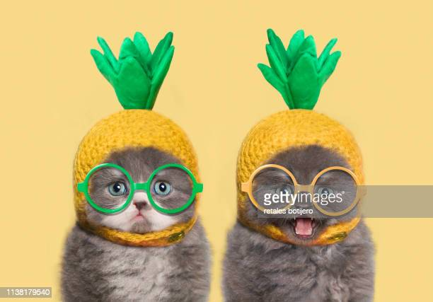 funny kittens - yellow hat stock pictures, royalty-free photos & images
