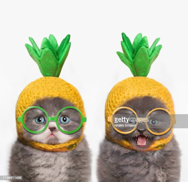 funny kittens - funny cats stock pictures, royalty-free photos & images