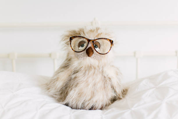 Funny pluche toy owl
