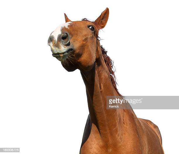 funny portrait of warmblood horse
