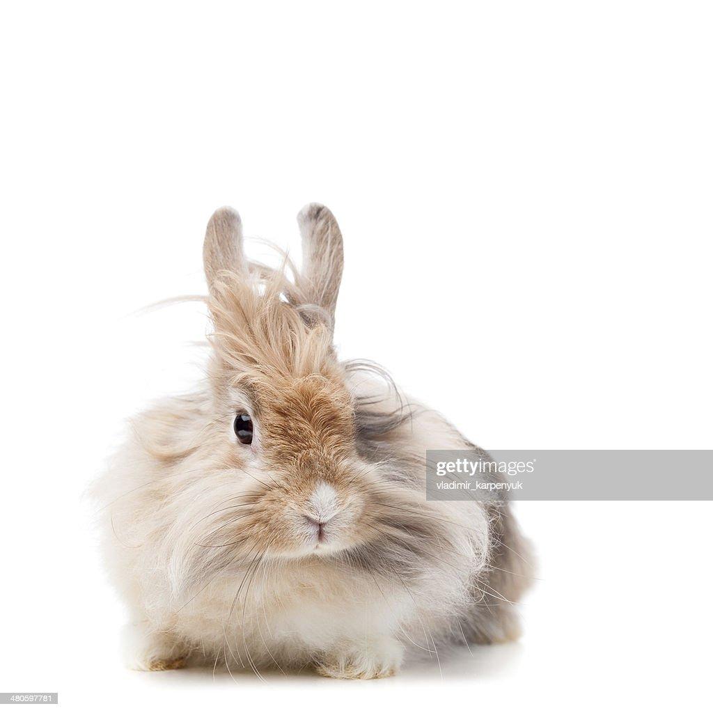 funny rabbit : Stock Photo
