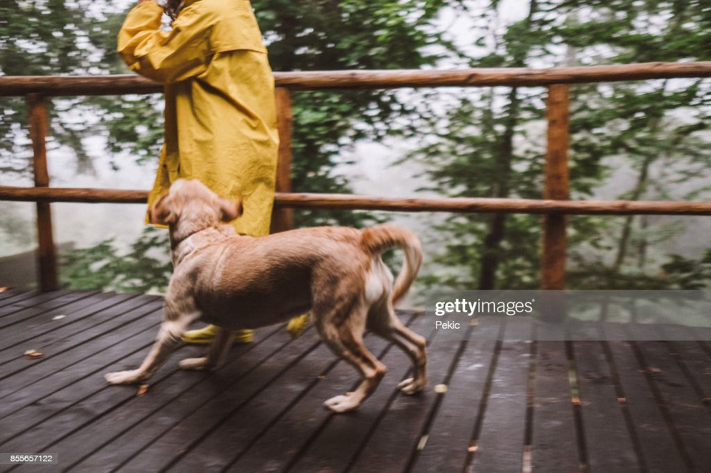 Funny Rainy Day With My Dog Stock Photo Getty Images