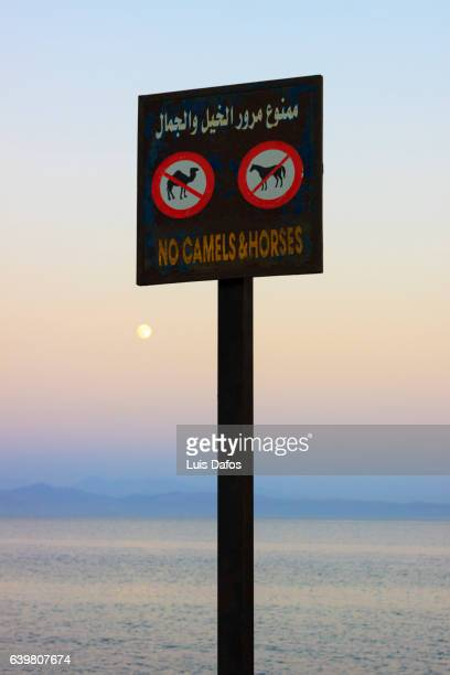 funny signpost at the resort town of dahab in the sinai peninsula - tourism in south sinai stock pictures, royalty-free photos & images