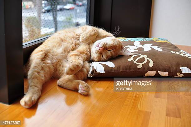 Funny sleeping posture