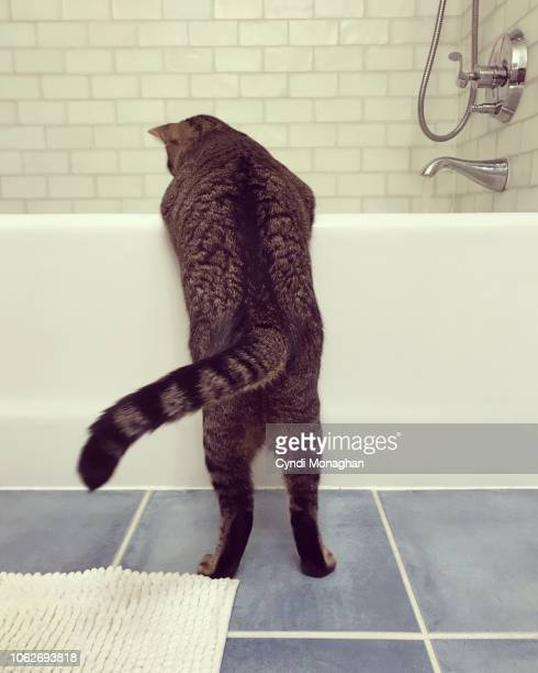 Funny View of a Cat from Behind as He Looks into a Bathtub