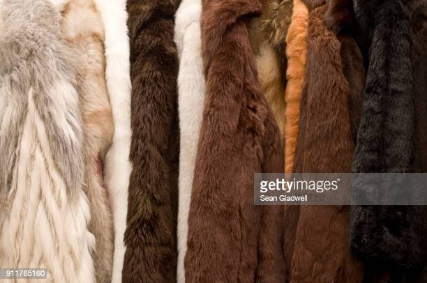 fur coats - fur stock pictures, royalty-free photos & images