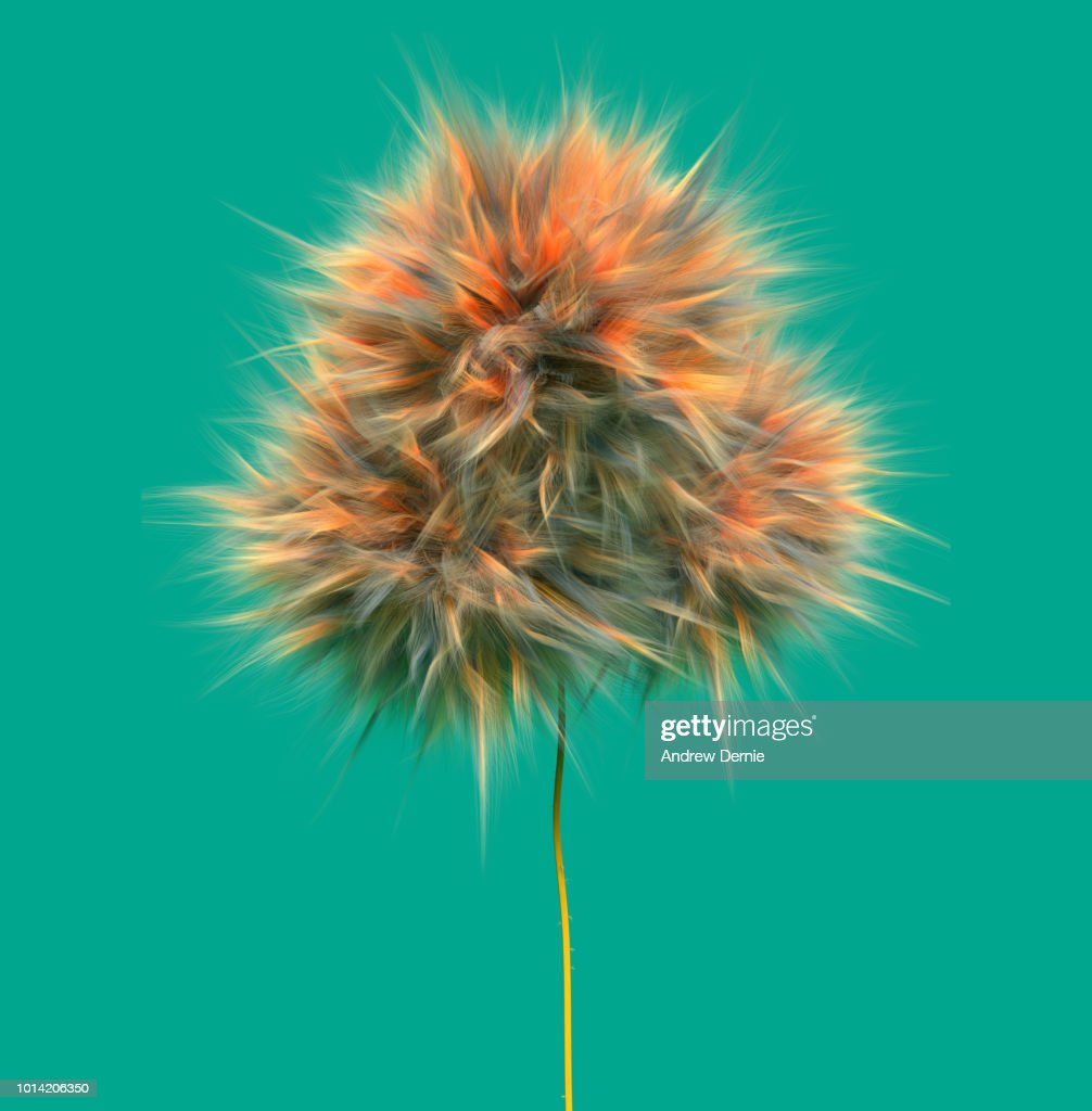 Fur Flower isolated green background : Stock Photo