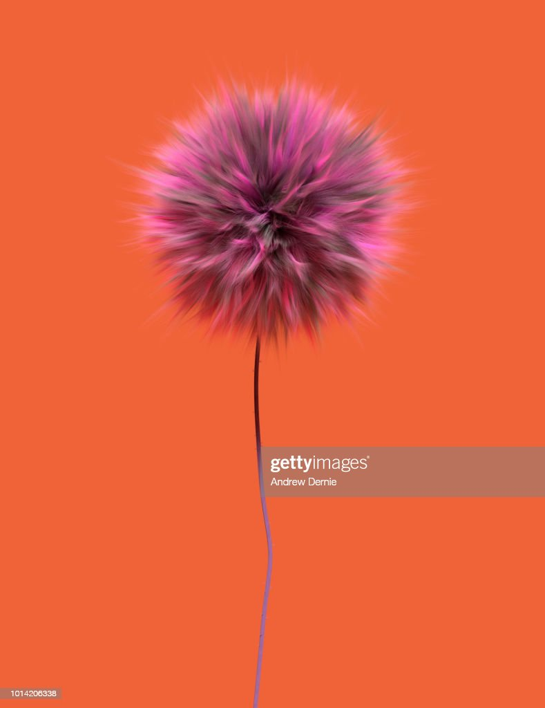 Fur Flower isolated orange background : Stock Photo