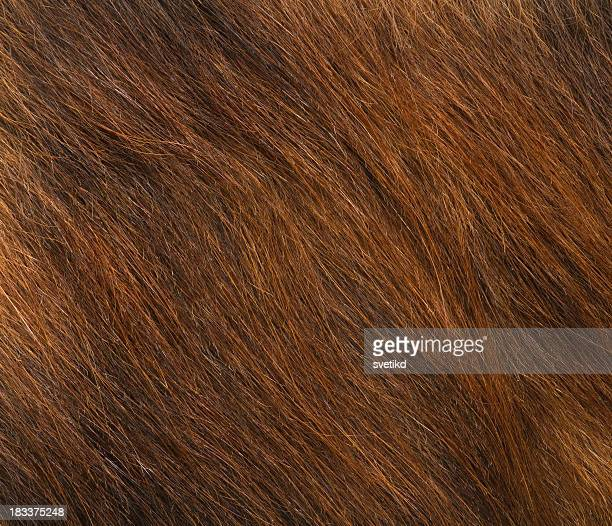 fur. - mottled skin stock pictures, royalty-free photos & images