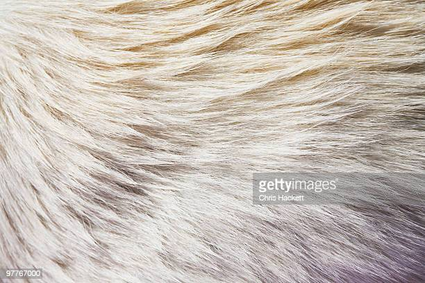 fur - fur stock pictures, royalty-free photos & images
