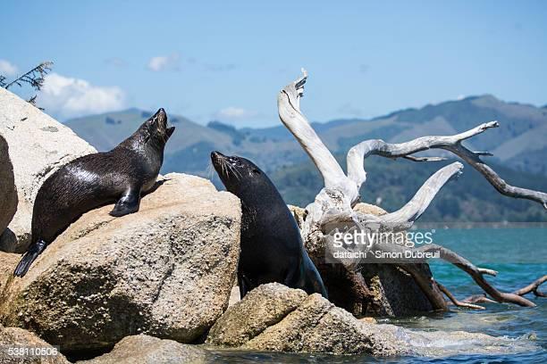 Fur seals in Abel Tasman National Park