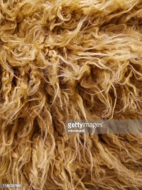fur texture background. - animal hair stock pictures, royalty-free photos & images