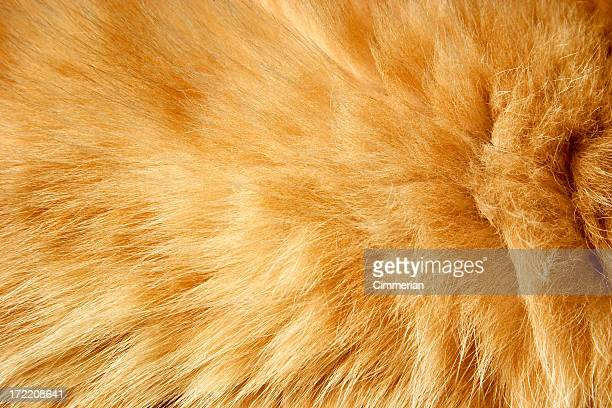 fur texture - fur stock pictures, royalty-free photos & images