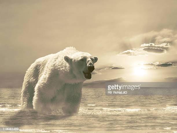 Furious White ploar bear in the sea