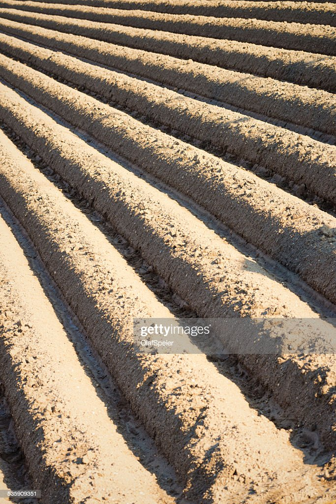 Furrows : Foto de stock