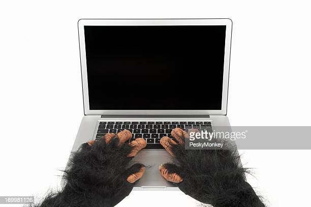 Furry Animal Hands Use Laptop Computer with Blank Screen