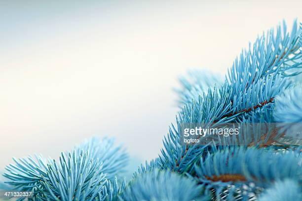 Árbol de navidad de fondo
