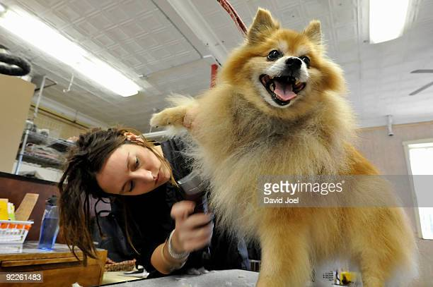 Furry dog getting a haircut by groomer