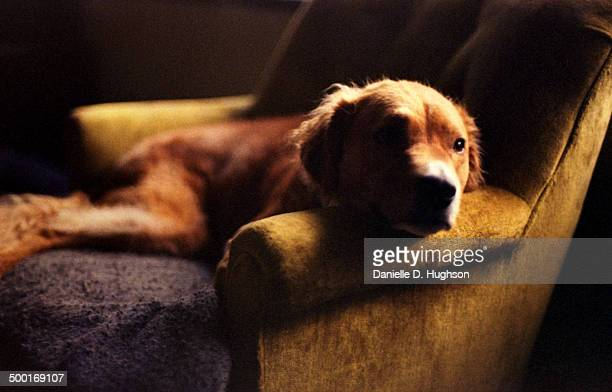 Furry dog lounging on recliner
