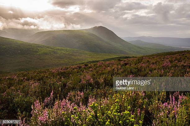 fynbos heathland in the walkerbay with dramatic clouds, grootbos, gansbay, western cape, south africa - fynbos fotografías e imágenes de stock