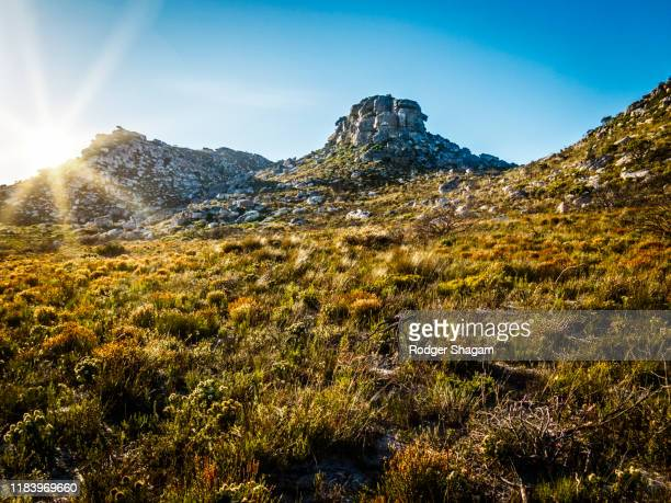 fynbos mountain landscape on the table mountain cape peninsula mountain range. sun causes bright rays across the image. - fynbos fotografías e imágenes de stock