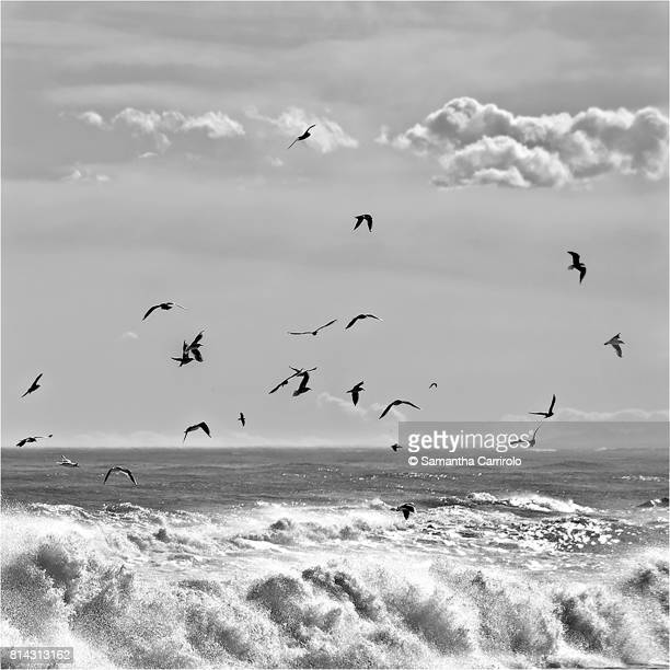 gabbiani in volo. mare. nuvole. bianco e nero. - bianco e nero stock pictures, royalty-free photos & images