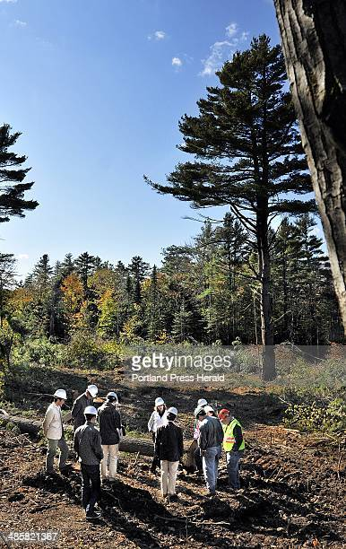 A group of Japanese loggers descended on a property on Mosswood Road in Brunswick Monday October 17 to study the land and learn about best logging...