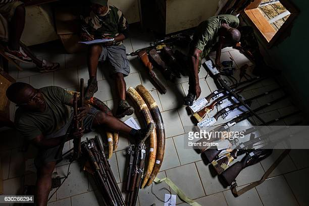 Gabon National Parks personal catalog recently confiscated poacher's guns and ivory at the Makoukou courts building close to Minkebi National Park...