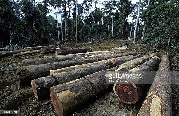 gabon. rainforest logs await export at logging camp in forest - gabon stock pictures, royalty-free photos & images