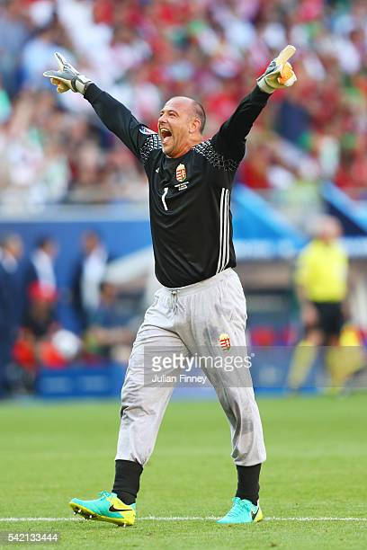 Gabor Kiraly of Hungary celebrates his team's first goal during the UEFA EURO 2016 Group F match between Hungary and Portugal at Stade des Lumieres...