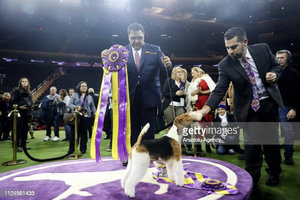Gabriel Rangel stands with 'King' the Wire Fox Terrier after winning Best in Show at the 143rd Westminster Kennel Club Dog Show at Madison Square...