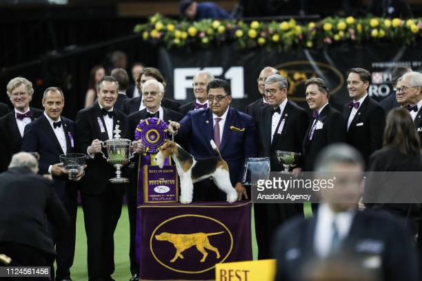 Gabriel Rangel's 'King' the Wire Fox Terrier wins the Best in Show at the 143rd Westminster Kennel Club Dog Show at Madison Square Garden in New York...