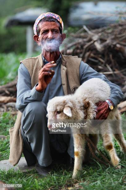Gaddi man smokes a biddi while he holds a small lamb in the Mandher village in Himachal Pradesh, India, on July 03, 2010.