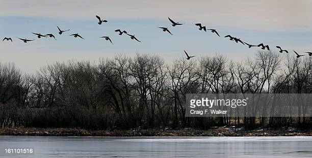 013009_ SALAZAR_CFW A gaggle of geese land on Lower Derby Lake at Rocky Mountain Arsenal National Wildlife Refuge in Commerce City Secretary of the...