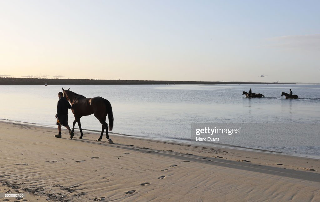 Gai Waterhouse trained horse English (L), prepares for tomorrow's The Everest, at Botany Bay on October 13, 2017 in Sydney, Australia.