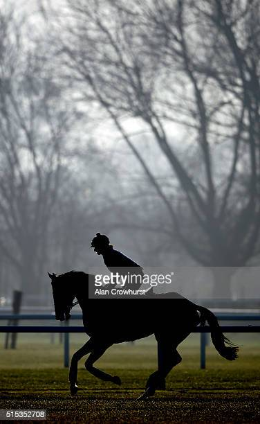 Gail Carlisle riding Douvan from the Willie Mullins stable on the gsllops at Cheltenham racecourse on March 13 2016 in Cheltenham England